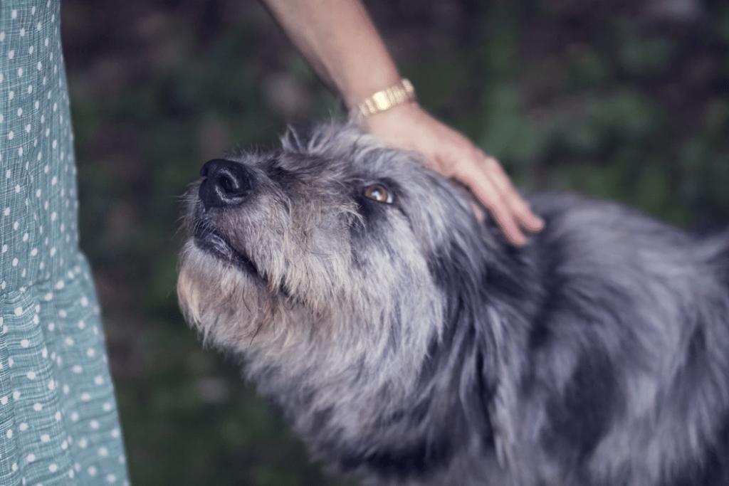 A Dog's Body Language