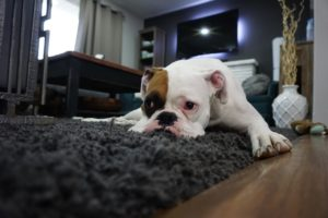Symptoms of Depression in Dogs