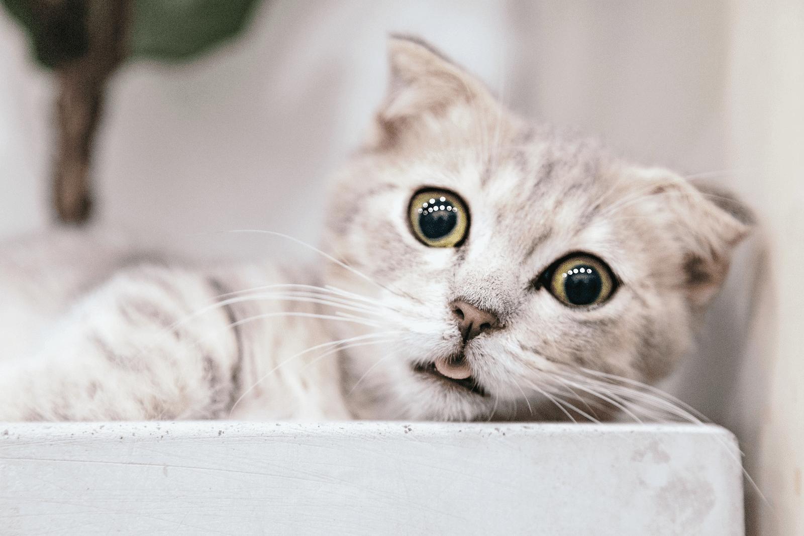 Fuzziest, Fluffiest Cats
