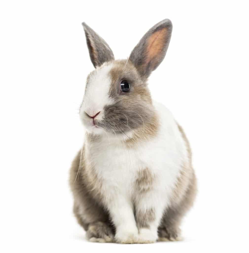 Pets Rabbits