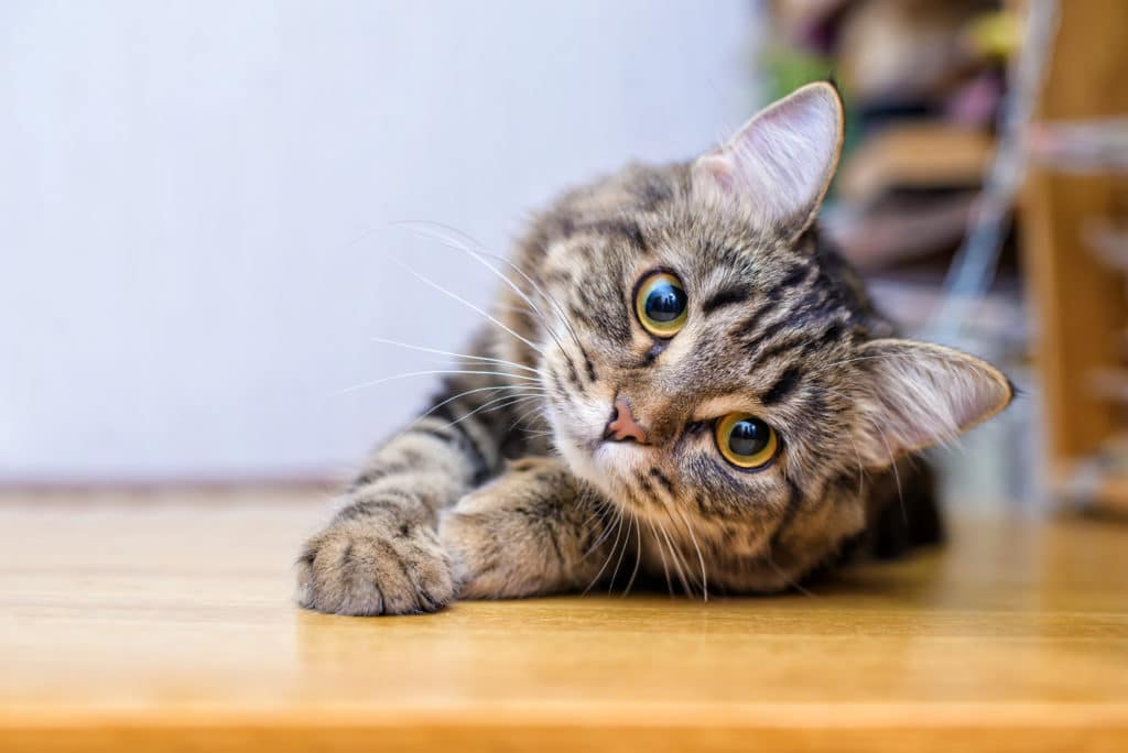 The Easiest Pets to Take Care Of: Cat