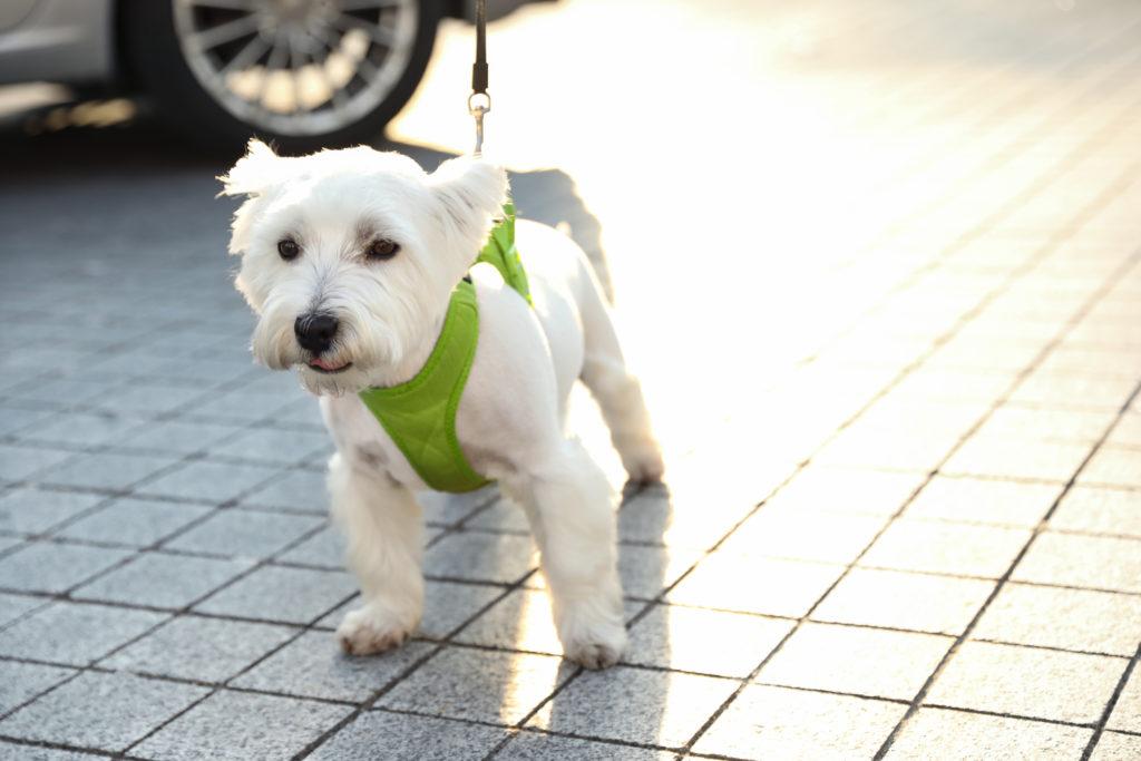Choosing a Dog Harnesses