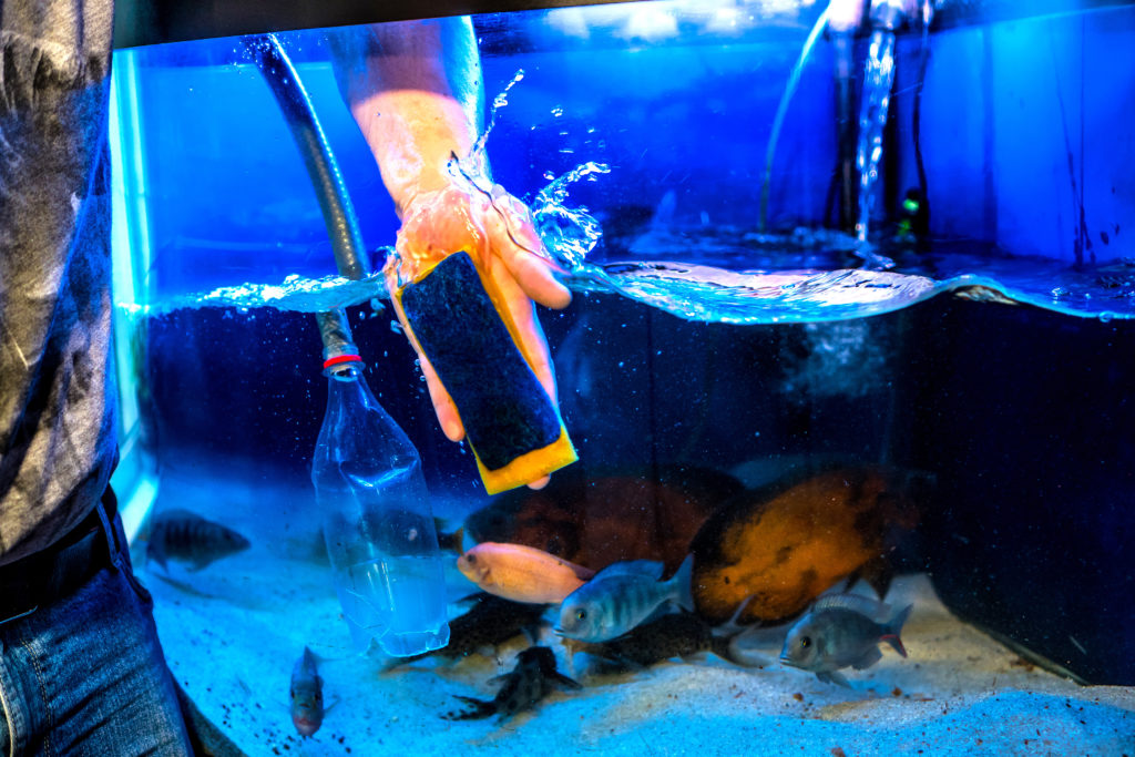 How Often to Clean Fish Tank