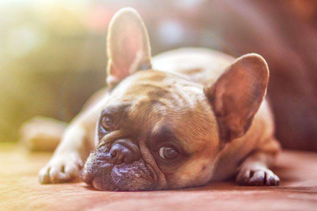 Positive Reinforcement Dog Trainer