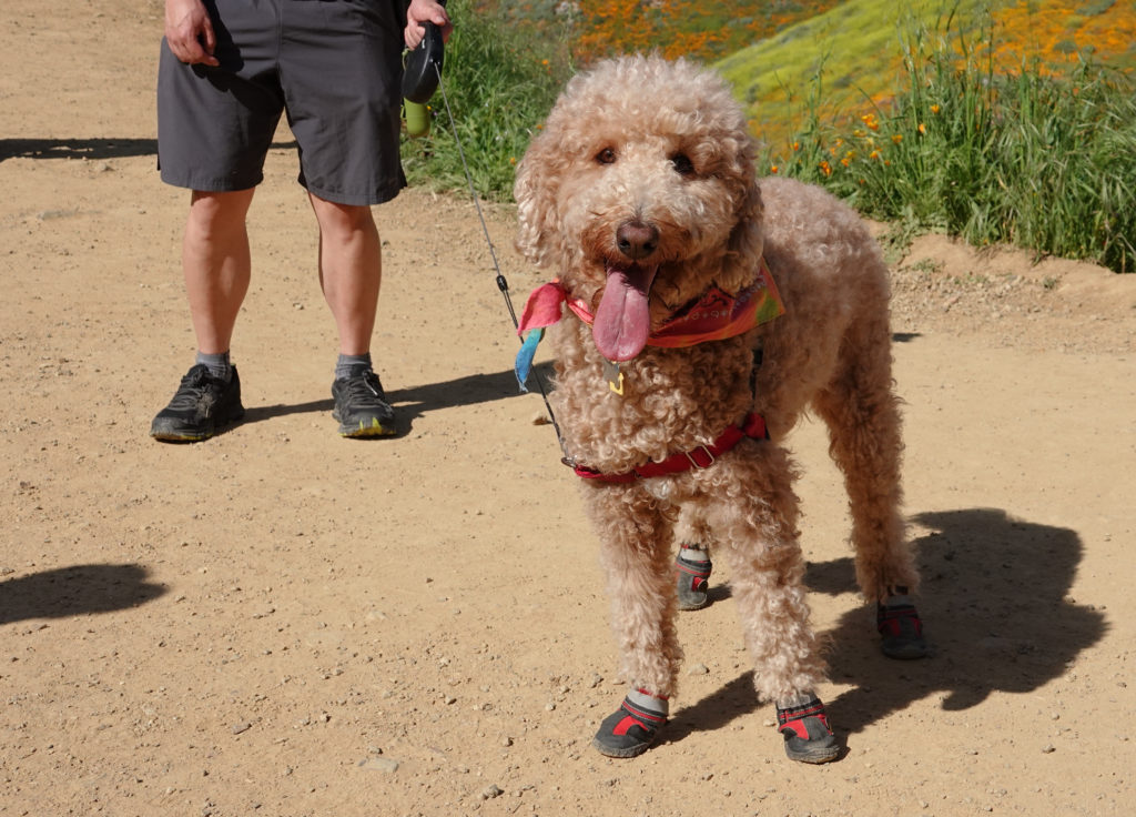 Dog Shoes for Hot Pavement