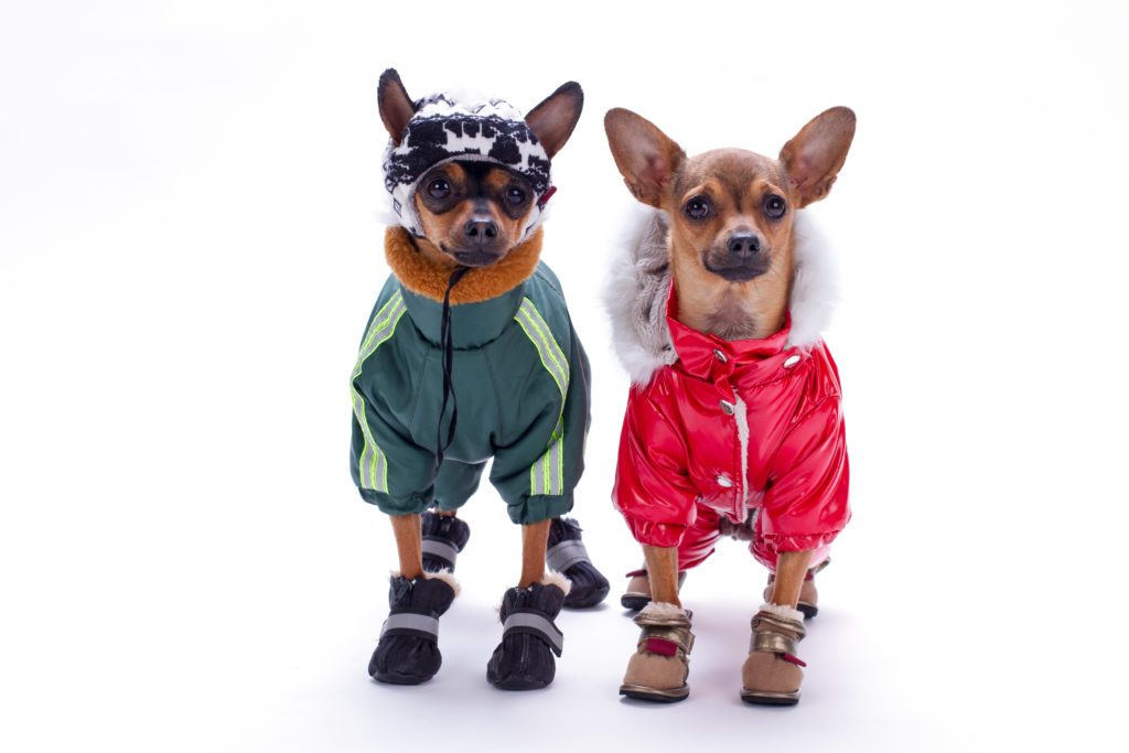 Dog Snow Boots and Socks