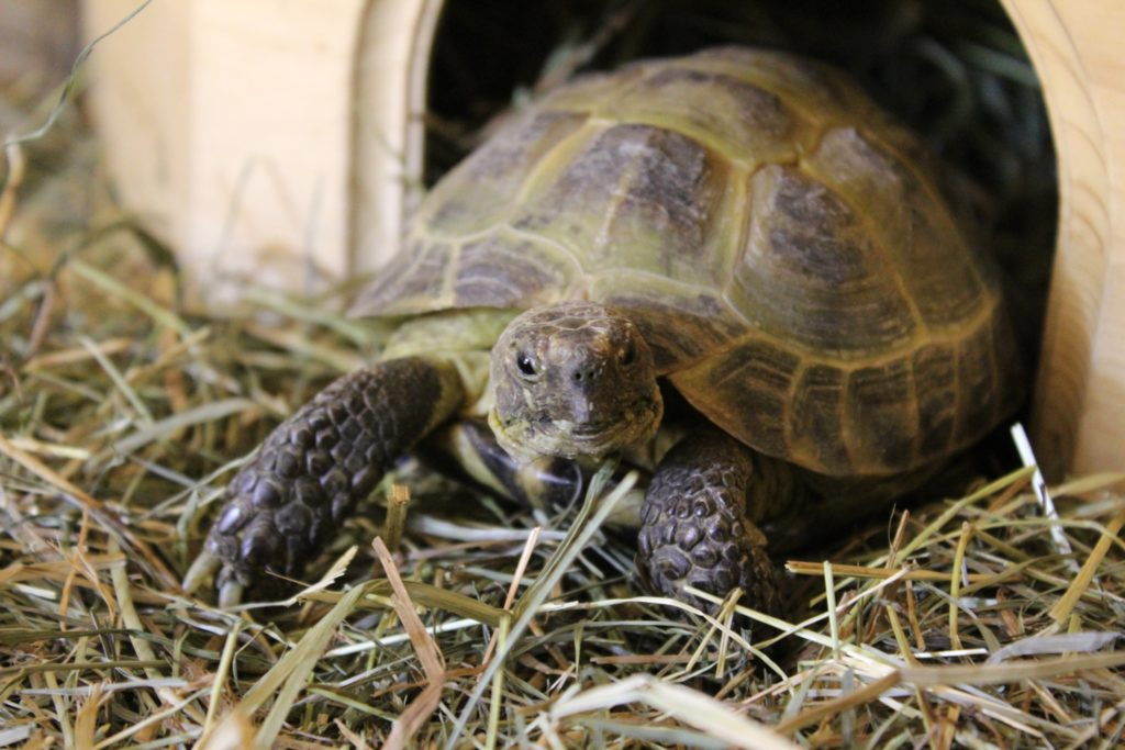 Pet Turtle Tortoises