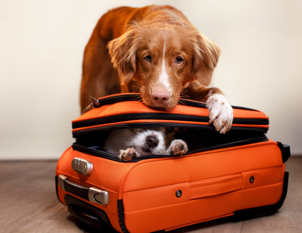 Preparing to Take Your Dogs on Vacation