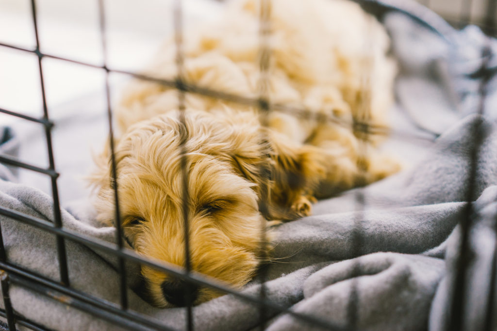 When to Use a Dog Crate