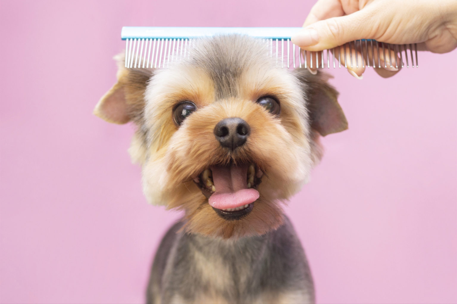 Brush Your Pet With a Lemon Comb