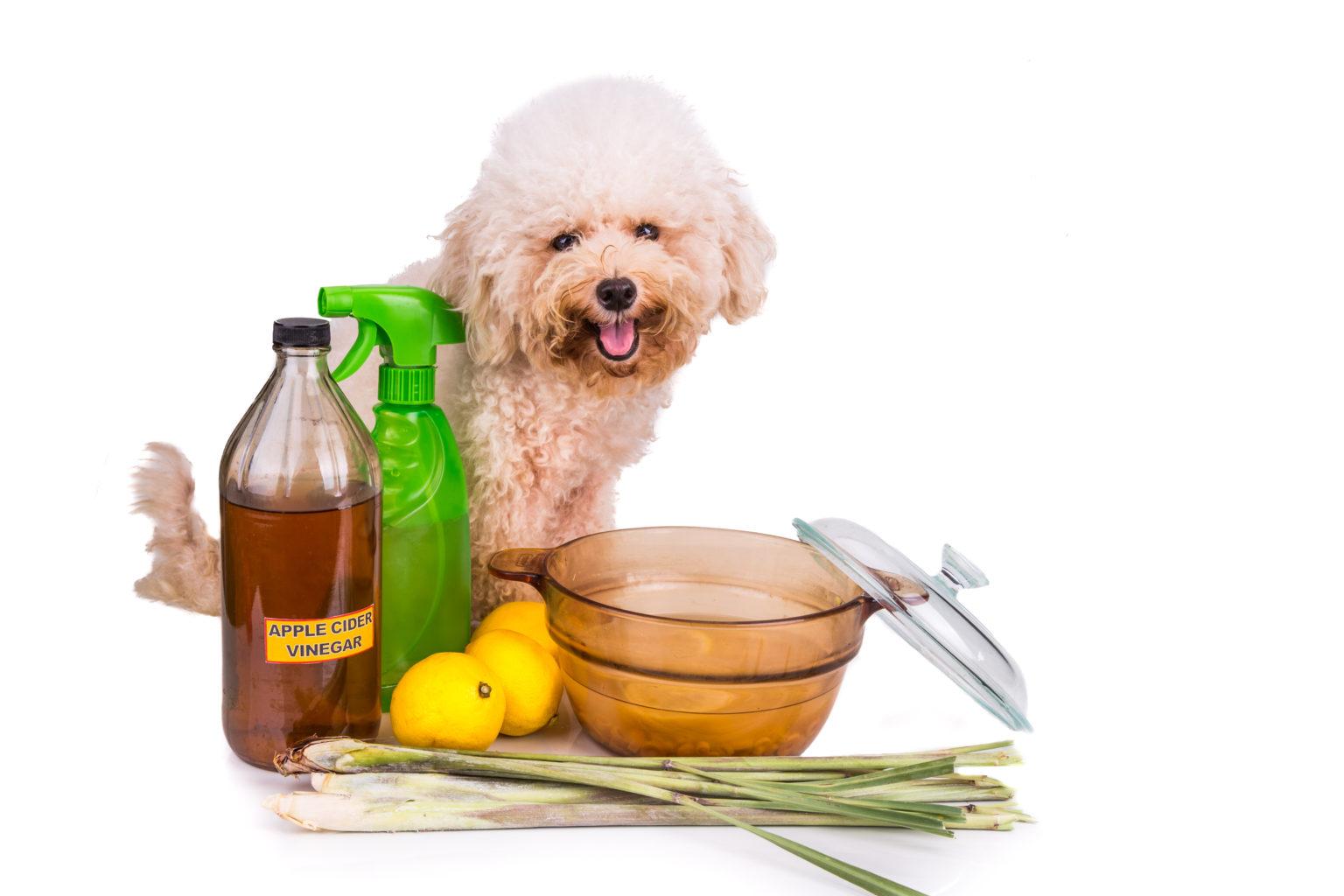 Feed Your Dog Apple Cider Vinegar