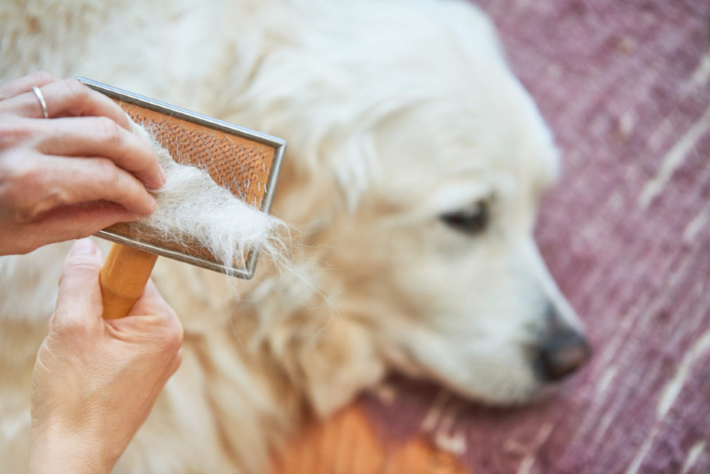 dog shedding