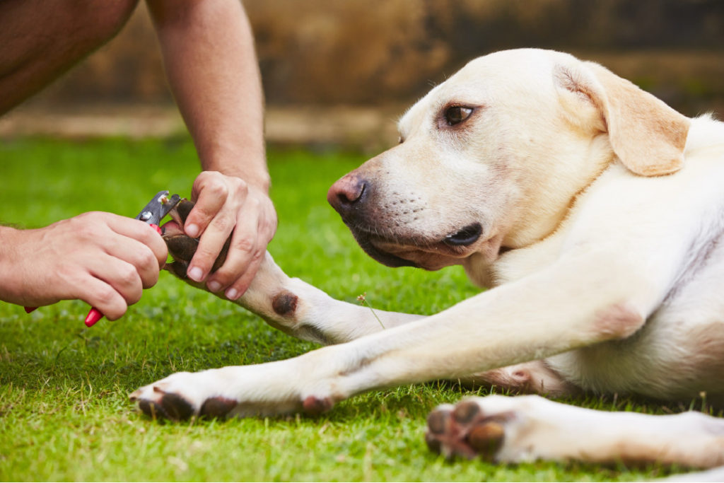trim my dog's nails