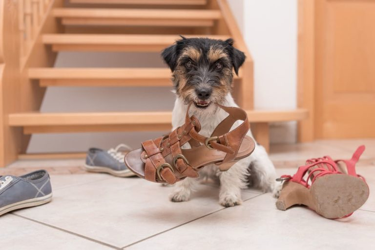 Improving Dog's Behavior