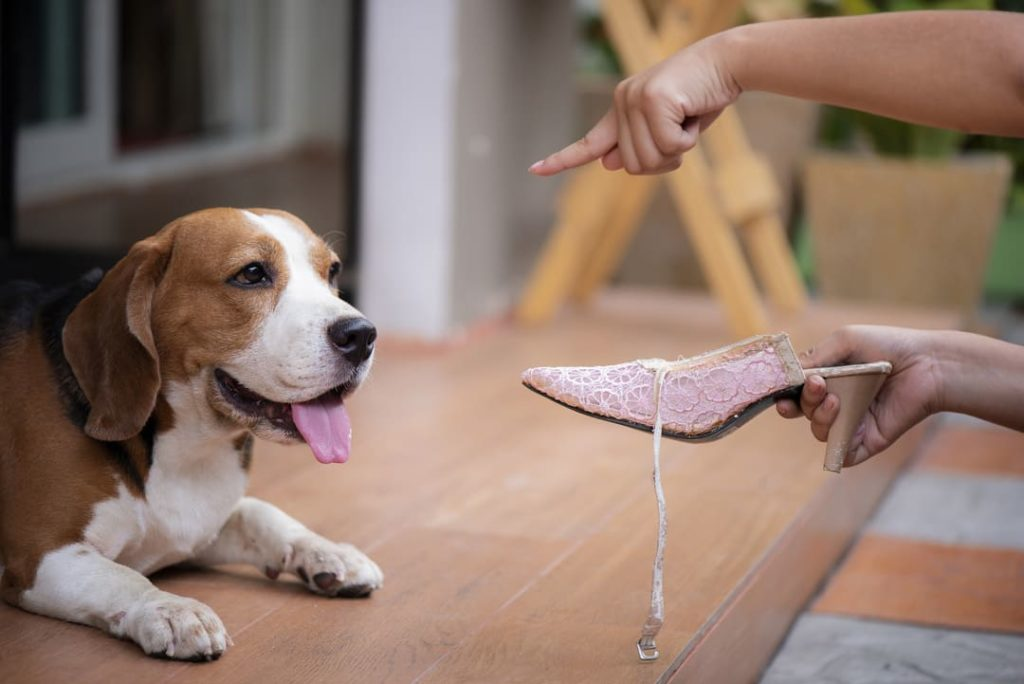 Behavior Problems Frequently Seen In Rescue Dogs