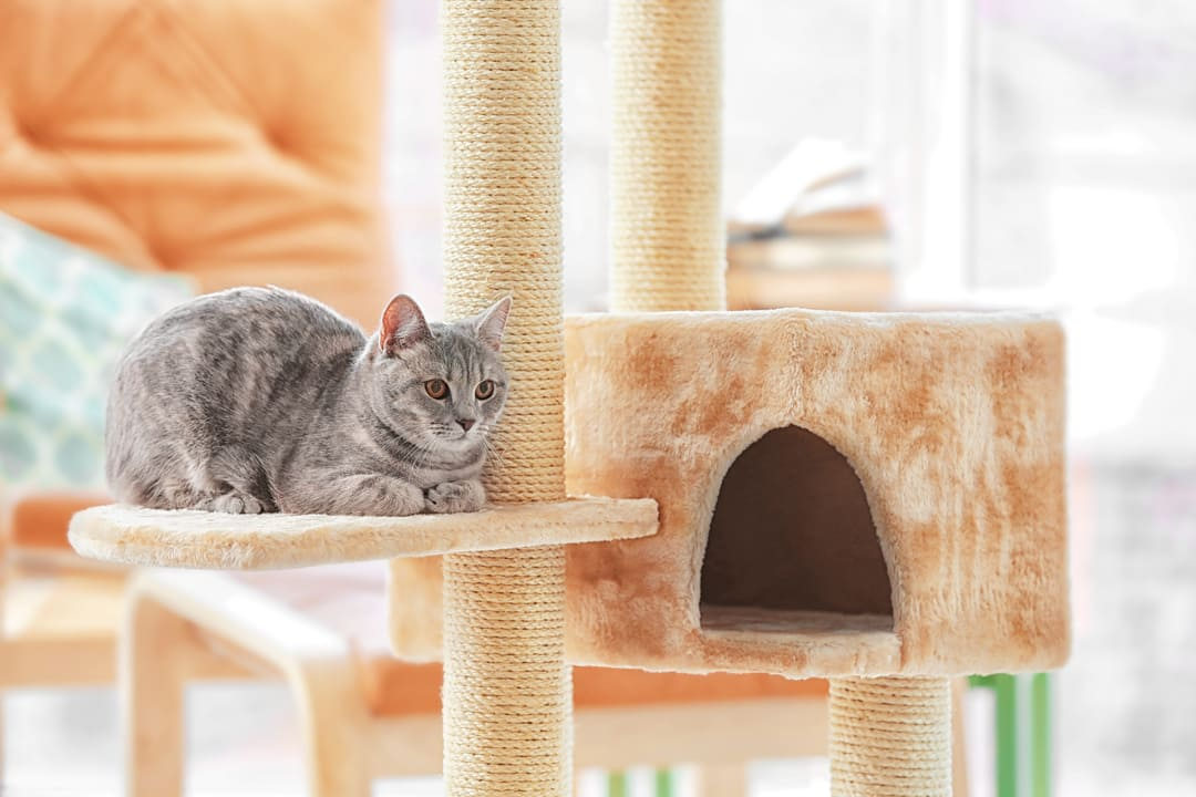 Examine Your Cat's Environment