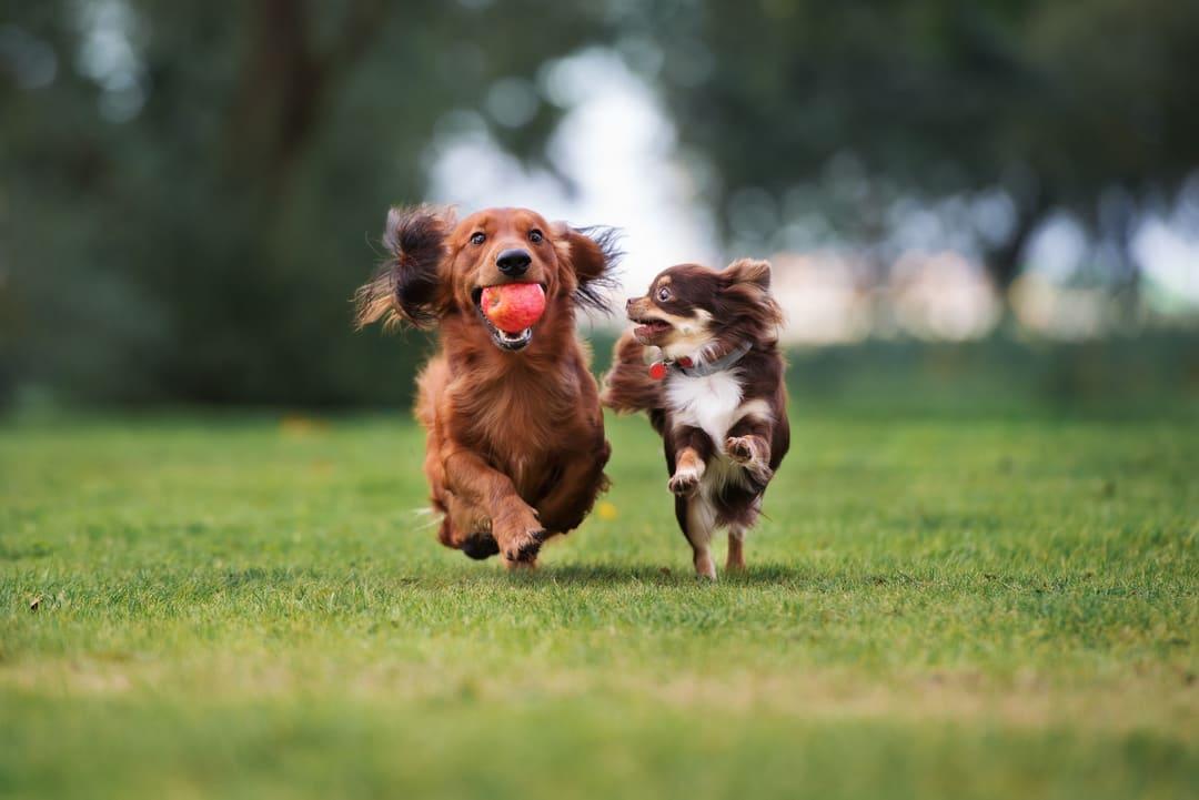 Fab Pet Treats for Wellness
