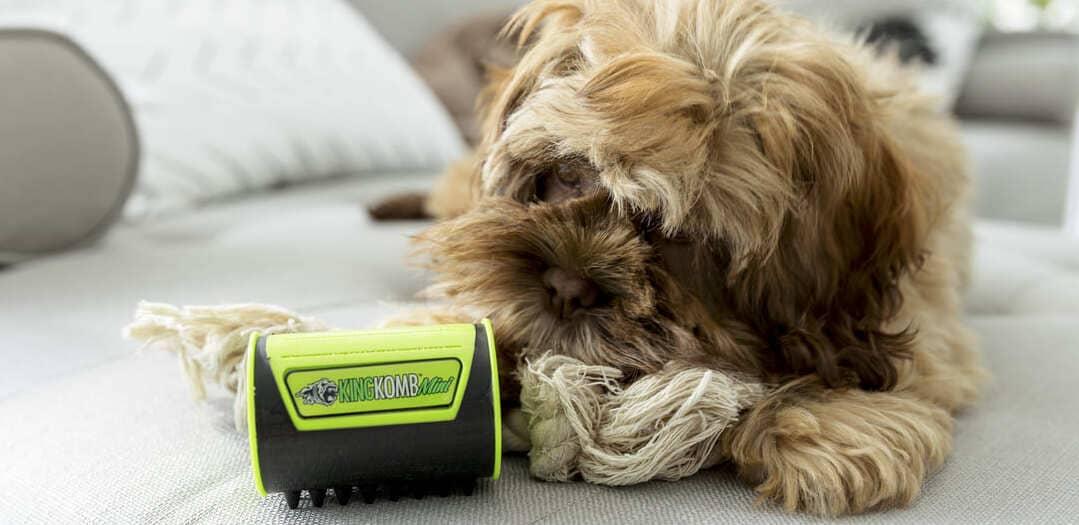 King Kanine 20% OFF Pet Wellness Essentials