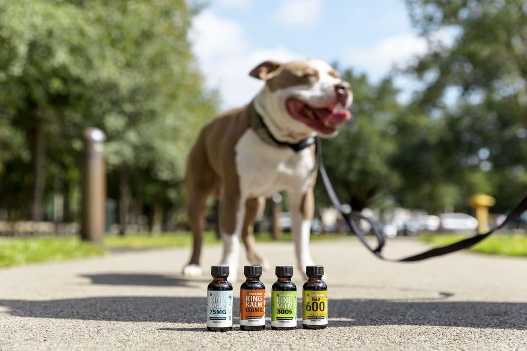 King Kanine Pet Essentials