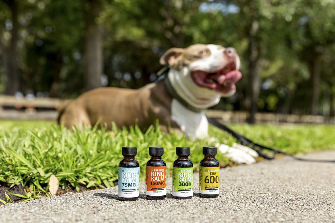 King Kanine's Solution For Anxious Dogs