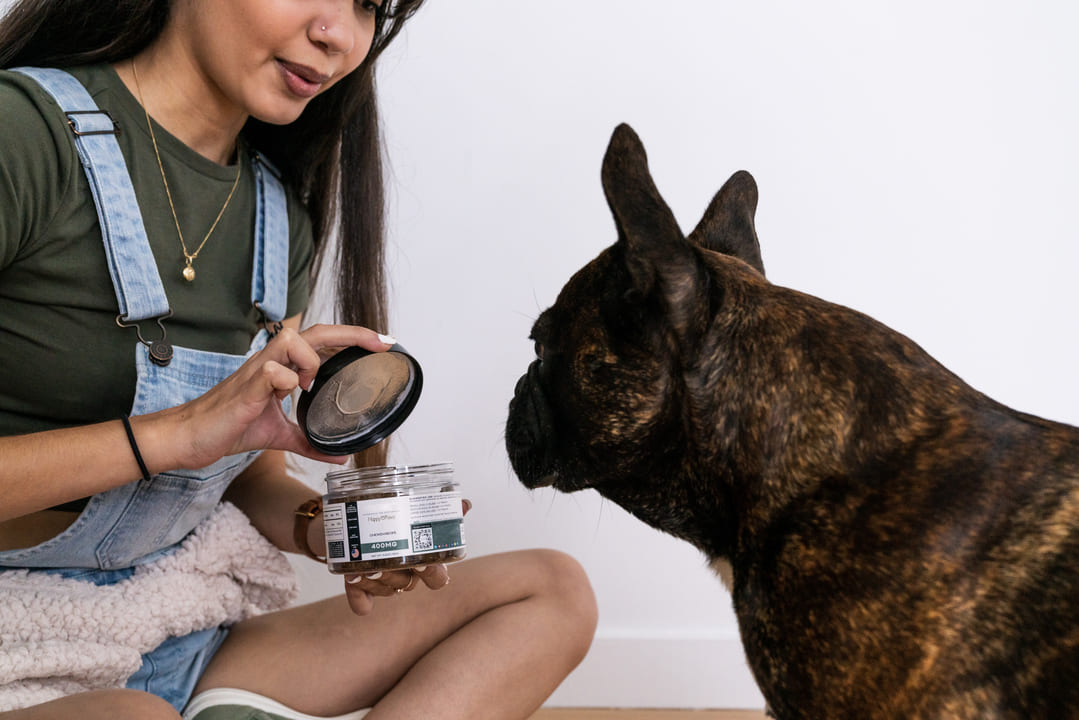 Manage Your Furry Friend Behavior Problems Naturally