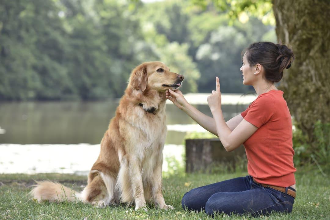 Refresh Your Dog's Training