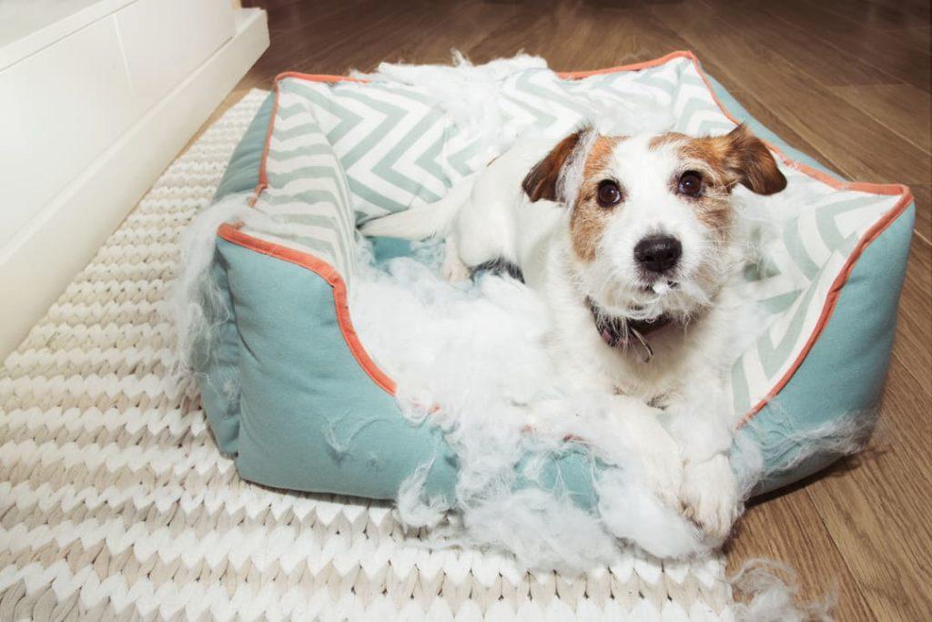 Rescue Dog Behavior