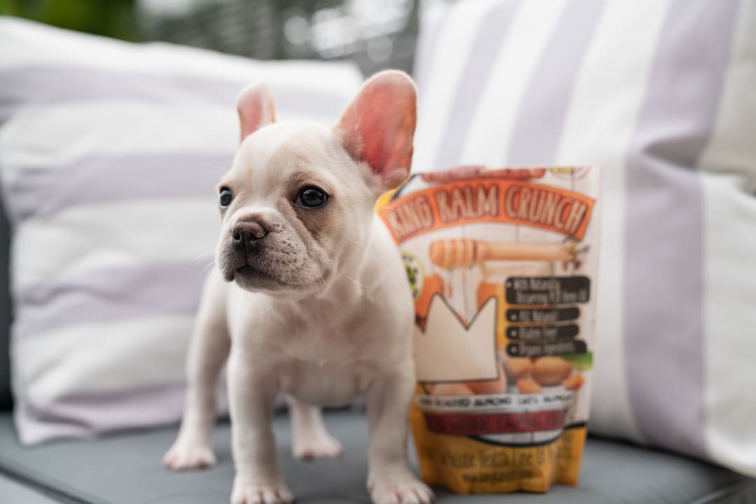 The Next Best Things In Pet Health