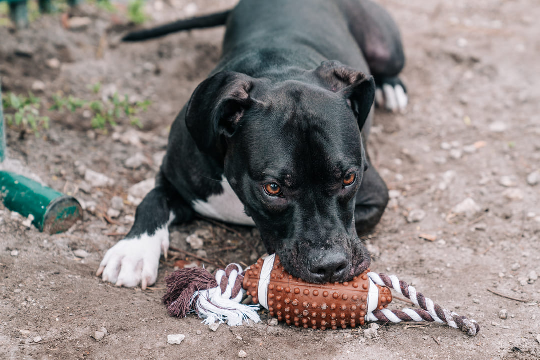 Why Pet Owners Are Turning to Copaiba & Dha Oil