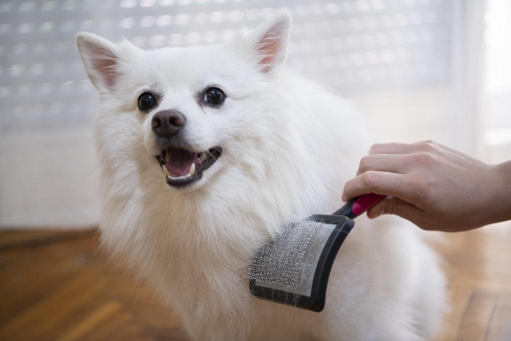 brush dog