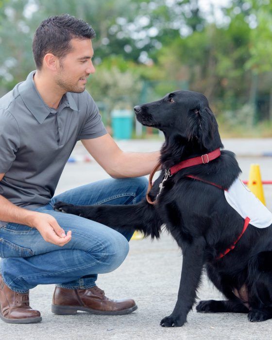 10 Service Dog Vests and Gear Ideas