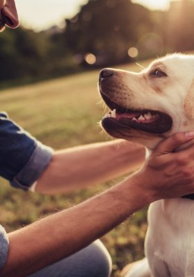 10 Benefits To Owning A Dog