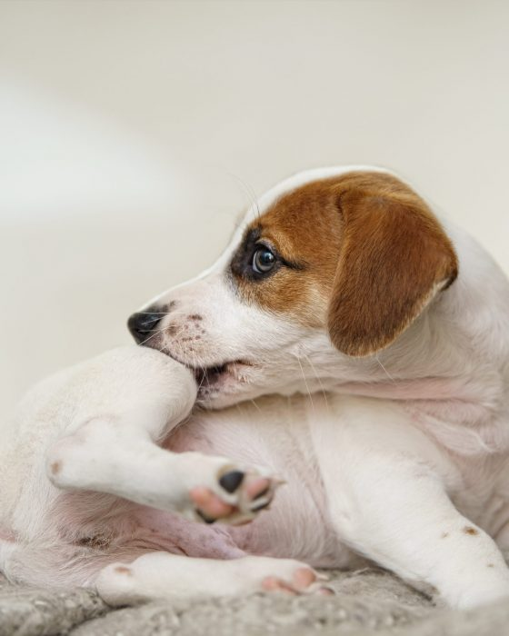 10 Tips on How to Get Rid of Fleas on Dogs
