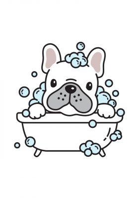 dog vector french bulldog bath shower cartoon character icon logo breed illustration