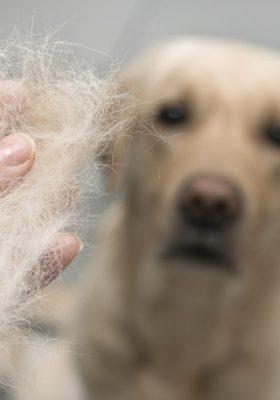 Dog wool close up