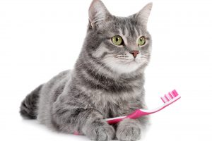 Best Cat Teeth Cleaning Tips That Every Owner Should Know
