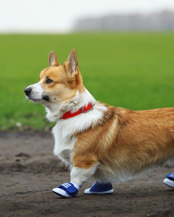 Best Dog Shoes and Socks