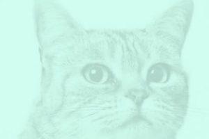 Bitmap Copy 6