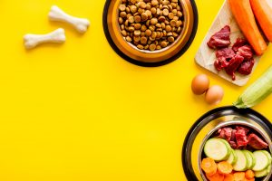 Cat Food For Kidney Disease: What to Look For