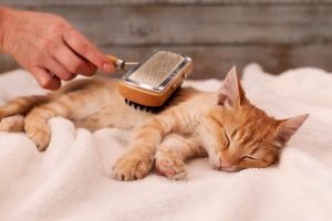 Cat Grooming: Tips & Things You Should Know About It