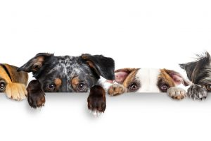 Healthiest Dog Breeds With the Least Health Problems