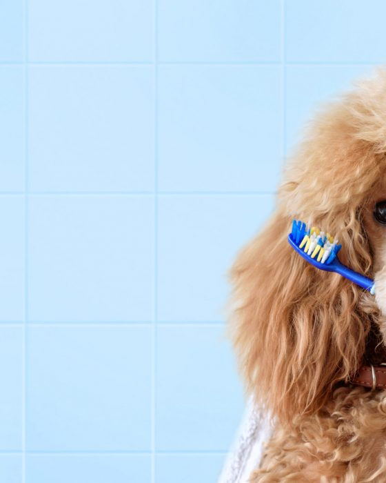 How to Properly Brush Your Dog's Teeth: Beginner's Guide