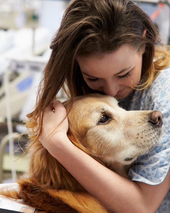 How to Train a Therapy Dog: Training & Certification