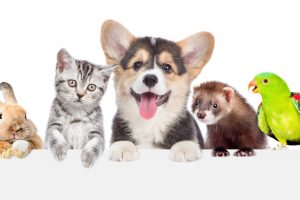 Low Maintenance Pets The Easiest Pets to Take Care Of