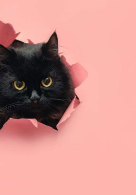 The Cutest Small Cat Breeds for Your Home