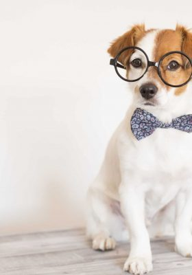 Top 20 Smartest Dog Breeds