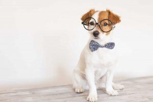 Top 20 Smartest Dog Breeds