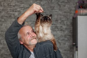 Types of Siamese Cats You Can Take Home