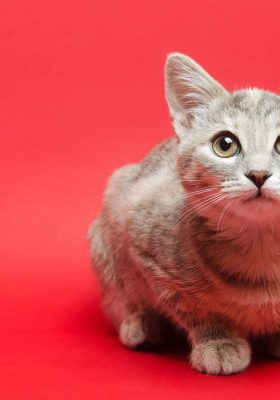 What Is a Tabby Cat Breed, Personality & Different Types