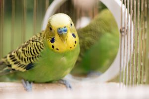 Why Should You Have a Pet Bird